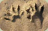 Identificatie van de dieren schade