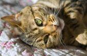 Methimazol bijwerkingen bij katten
