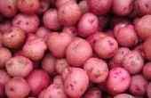 How to Plant aardappelen in Florida