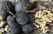 Zijn zwarte walnoten giftig voor honden?