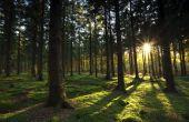 Wat zijn de bomen die niet hun bladeren in de herfst vergoten doen?