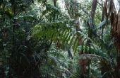 Wat zijn drie Types van producenten in het tropische regenwoud gevonden?