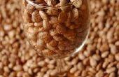 Hoe Bean zaden ontkiemen