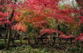 Struiken met rode kleuring alle jaar