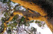 Definitie van gevaar bomen in verzekeringen