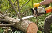 Hoe herken ik de leeftijd van een boom zonder het kappen