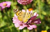 Bloemen die vlinders graag