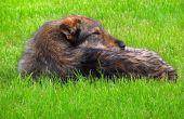 Hoe vlooien te houden uit het huis & off van honden