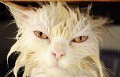 Hoe te schoon ontlasting van de vacht kat