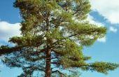 Hoe te kappen van een boom in segmenten