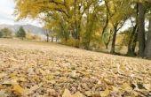 Wat kan bladeren maken & gras knipsels ontleden sneller?