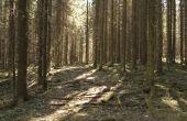 Reistips voor een bezoek aan de gematigde bladverliezende wouden