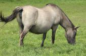 Stadia van de zwangerschap bij paarden