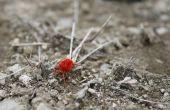 How to Get Rid van de kleine rode spint op beton