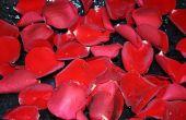How to Make hars sieraden met Rose bloemblaadjes