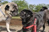 Hoe te stoppen met een hond uit het ontschorsen bij een andere hond