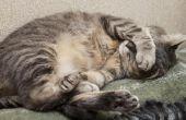 Hoe de behandeling van een kat wormen