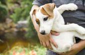 How to Get Rid van Dog wormen zonder medicijnen