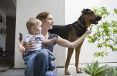 Introducties zijn In volgorde: Nieuwe huisdieren, nieuwe Baby