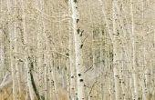 De verschillen in bos, bossen & Jungles