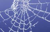 Hoe herkent u gevaarlijke spin bijt