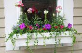 Hoe te planten in bloembakken
