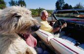 Californië regels voor huisdieren vanuit een andere lidstaat verplaatsen