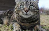 Hoe te achterhalen van een kat emoties