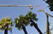 Bomen in elektrische leidingen