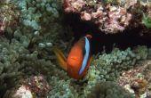 Effecten van lage zoutgehalte niveaus op vis