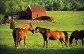 Hoe krijg ik een paard om te stoppen met het bijten van andere paarden