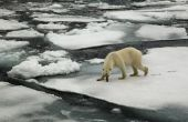 Globale opwarming van de aarde onderwerpen voor een onderzoek papier