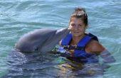 Waar om te zwemmen met dolfijnen in Europa