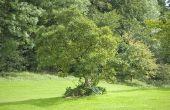 Wat Is de beste tijd om te trimmen bomen & struiken?
