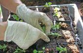 Wanneer te planten groenten in Pennsylvania