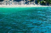 Belang van Water naar levende organismen