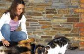 How to Train een schichtig kat niet bang te zijn van een hond