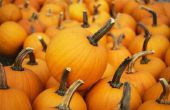 Pompoen Patches, spookhuizen & Halloween activiteiten voor kinderen in Florida