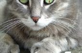 De voordelen van Polydactyl katten