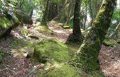 Dominante planten in een tropisch regenwoud