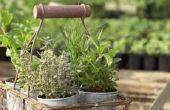 Hoe maak je potten kippengaas planten