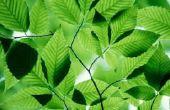 5 dingen die een Plant nodig heeft om te overleven