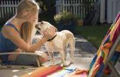 Hoe teken je een Puppy stapsgewijze