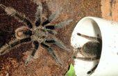 Tekenen & symptomen van de beet van een spin