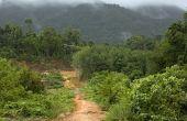 Bomen van het tropisch regenwoud