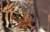 Waarom mensen niet mag doden bedreigde dieren