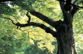 De nadelen van het verwijderen van bomen in uw tuin