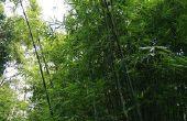 Hoe te voegen Bamboe schermen