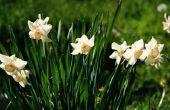 De beste bloemen voor gebruik als rand door trottoirs