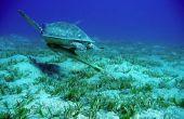 Lijst van bedreigde zeedieren